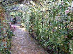 Rose arch in Barnes design