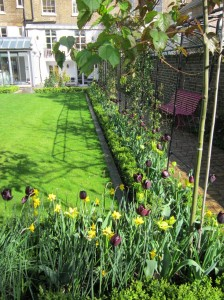 Spring tulips in this Barnes garden design