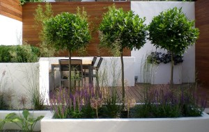 modern garden design in balham