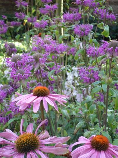garden plant maintenance