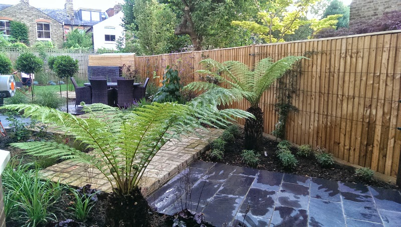 tree ferns in this planting design