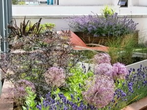 stunning roof top planting