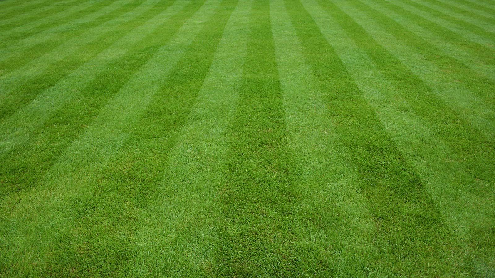 lawn`1